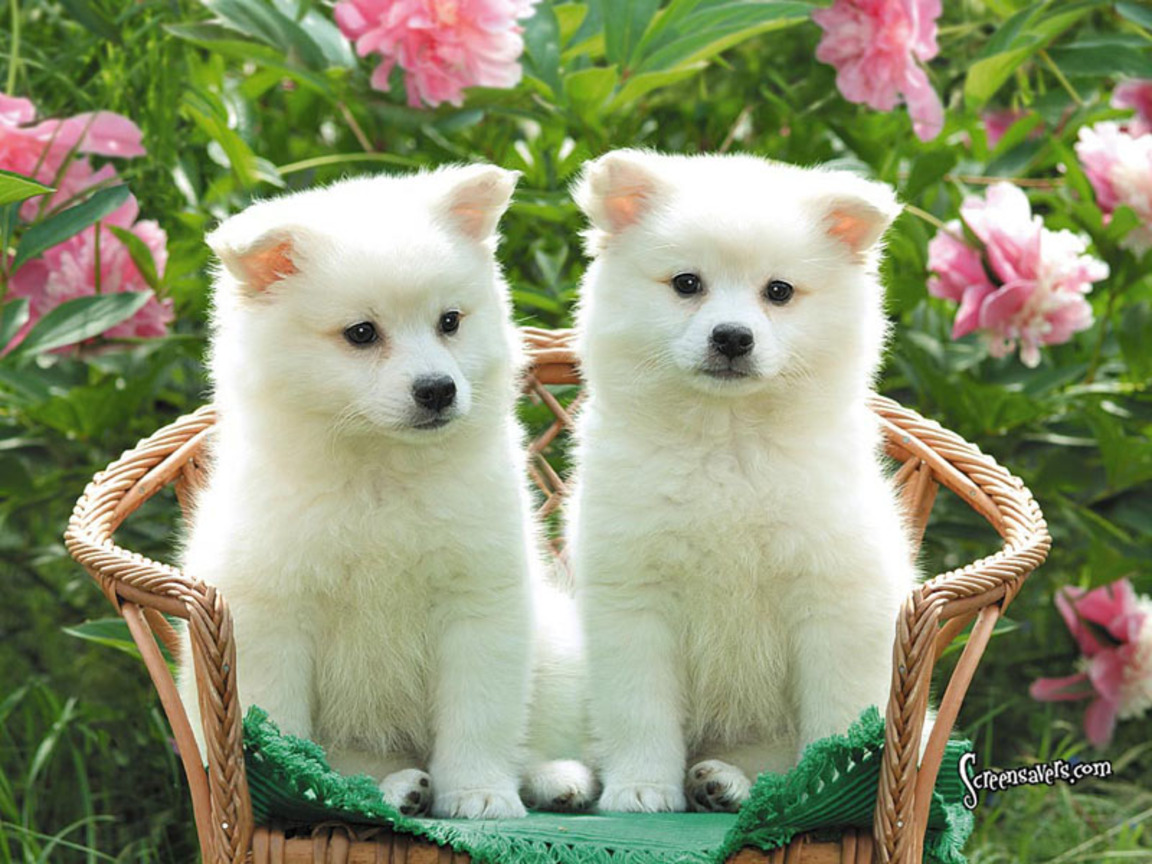 hd wallpapers of cute puppies | Unique Things