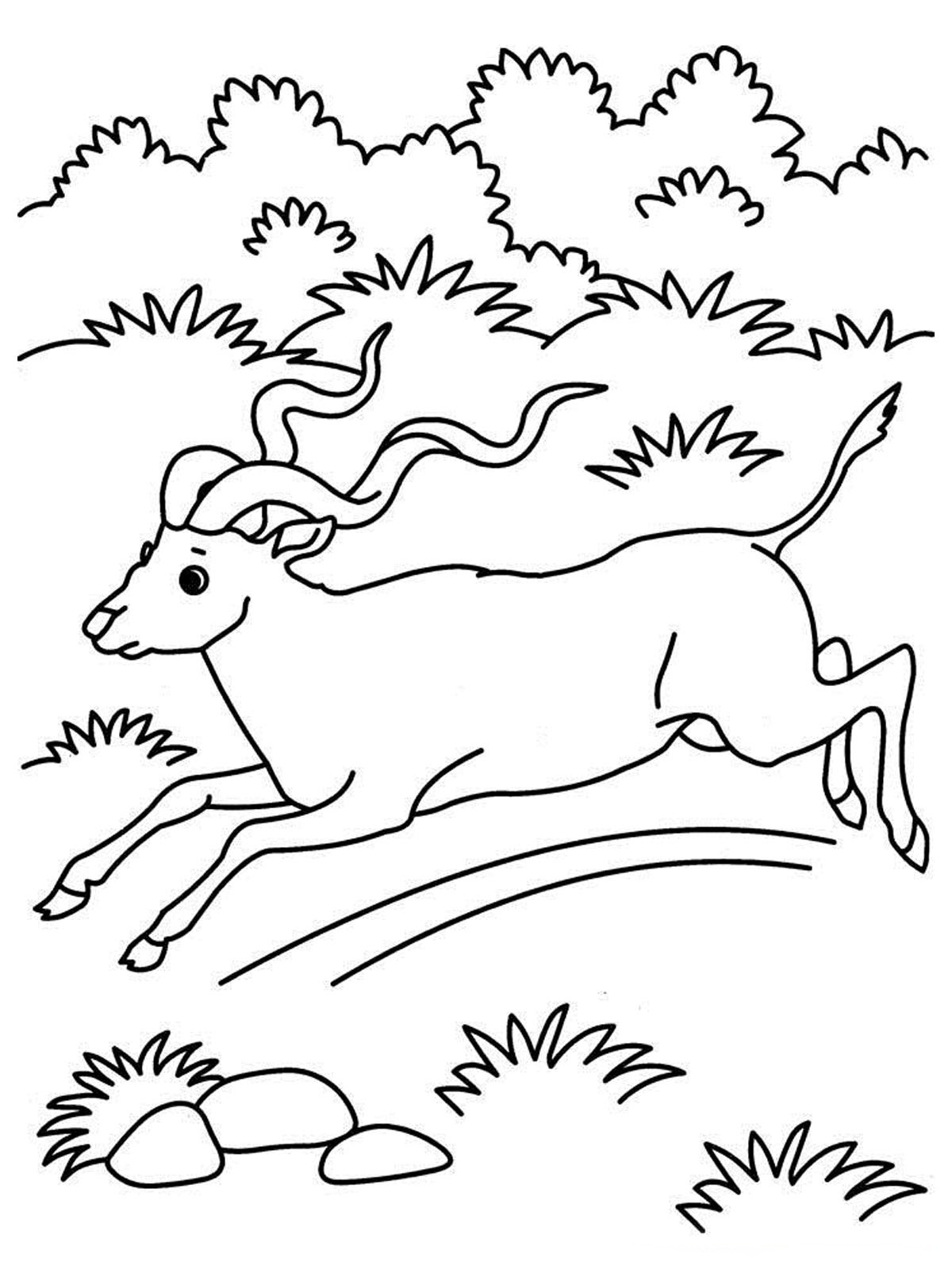 Antelope Coloring Page...