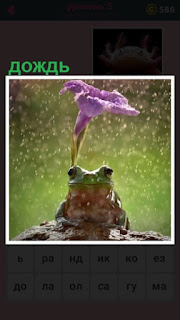 651 слов лягушка сидит под дождем 5 уровень