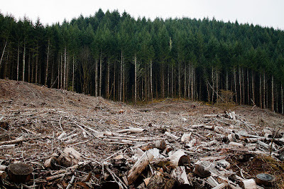 Temperature changes wreak ecological havoc in deforested areas