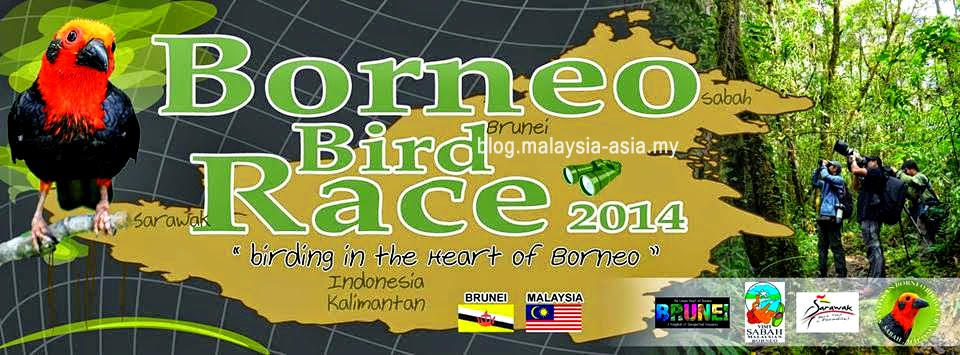 The Borneo Bird Race 2014