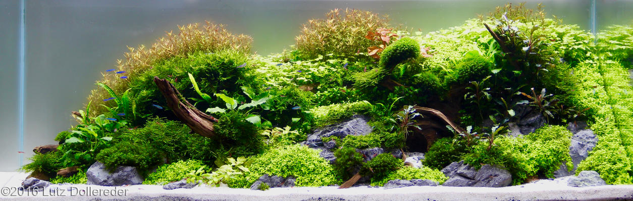 Aquascape Tutorial Guide Step By Step By James Findley