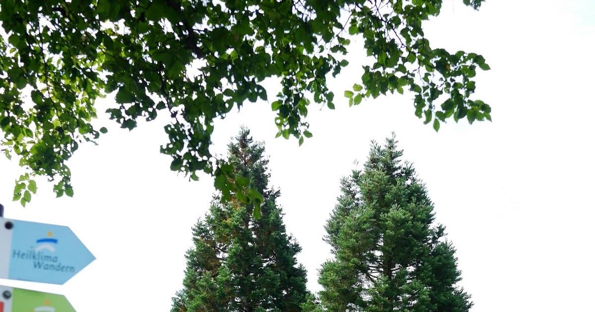 Le monde de Kitchi: Mein Freund, der Baum: Mammutbaum