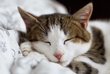 ความสำคัญของการนอน ผลกระทบต่อสุขภาพจิต, สมอง และต่อร่างกาย