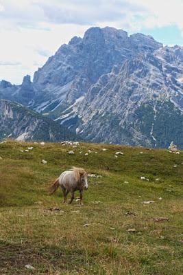 Ponys in Südtirol, Drei Zinnen