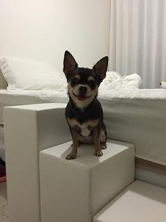 escadas para cães 1