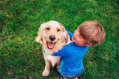 Choosing the right breed of dog for your family