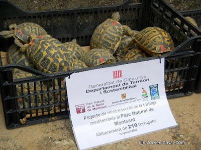 Tortugas reintroducidas