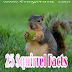 गिलहरी से जुड़े 25 रोचक तथ्य और अनोखी जानकारी Squirrel Facts In Hindi