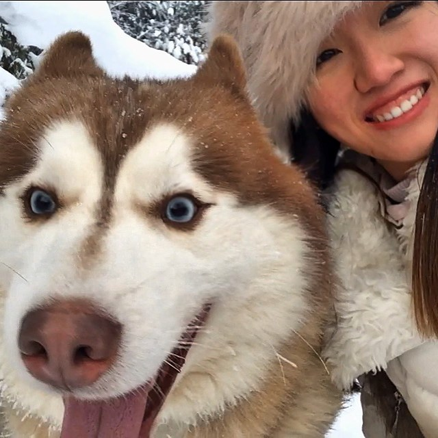 Husky selfie