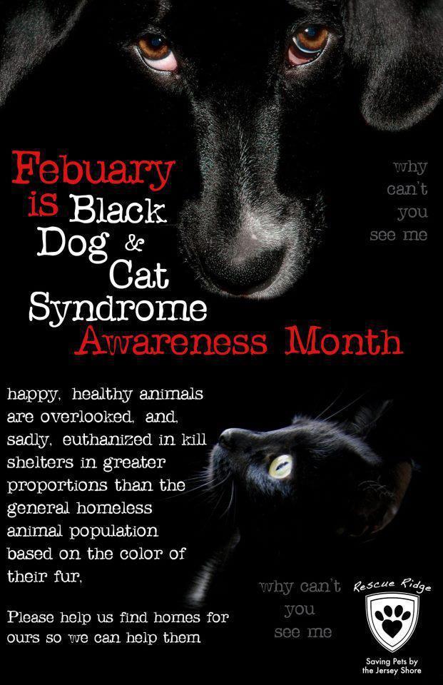 Black Cat And Dog Awareness Month