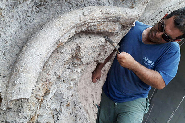 20-million-year-old elephant tusks unearthed in Iran