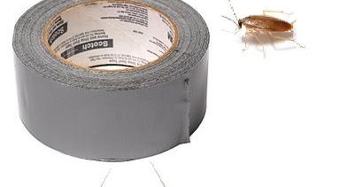 Aprende a evitar controlar y eliminar plagas en tu hogar como eliminar cucarachas - Como eliminar ratones en el hogar ...