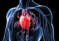 Cara Mencegah Faktor Risiko Penyakit Jantung Koroner  Cara Mencegah Faktor Risiko Penyakit Jantung Koroner