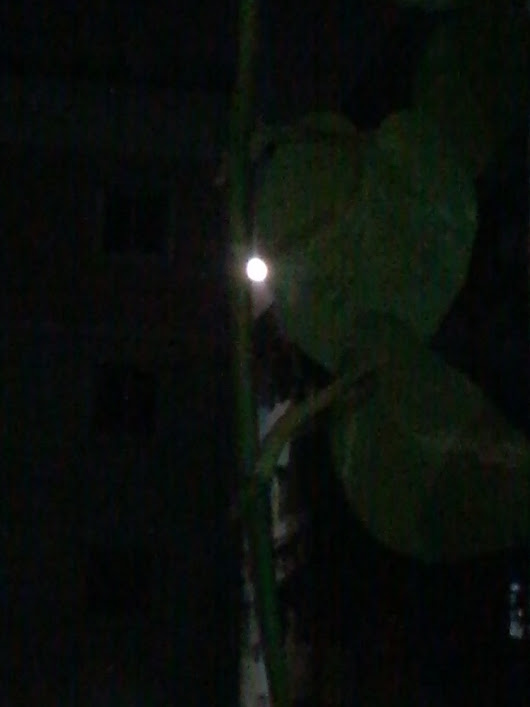 Moon in the plant