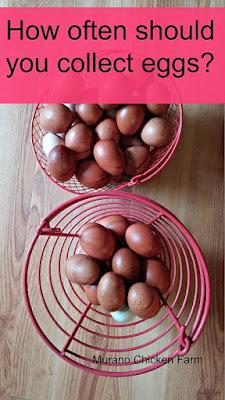 Farm fresh eggs in baskets