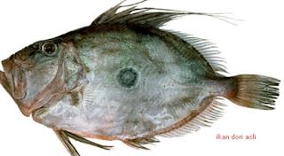 Ikan dory banyak dijual dalam bentuk potongan d Kabar Terbaru- IKAN DORI