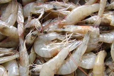 Lowongan Kerja Pekanbaru : Jual Ikan & Udang Segar Juli 2017