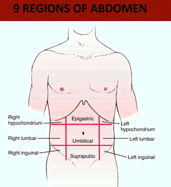 physical-examination-abdomen