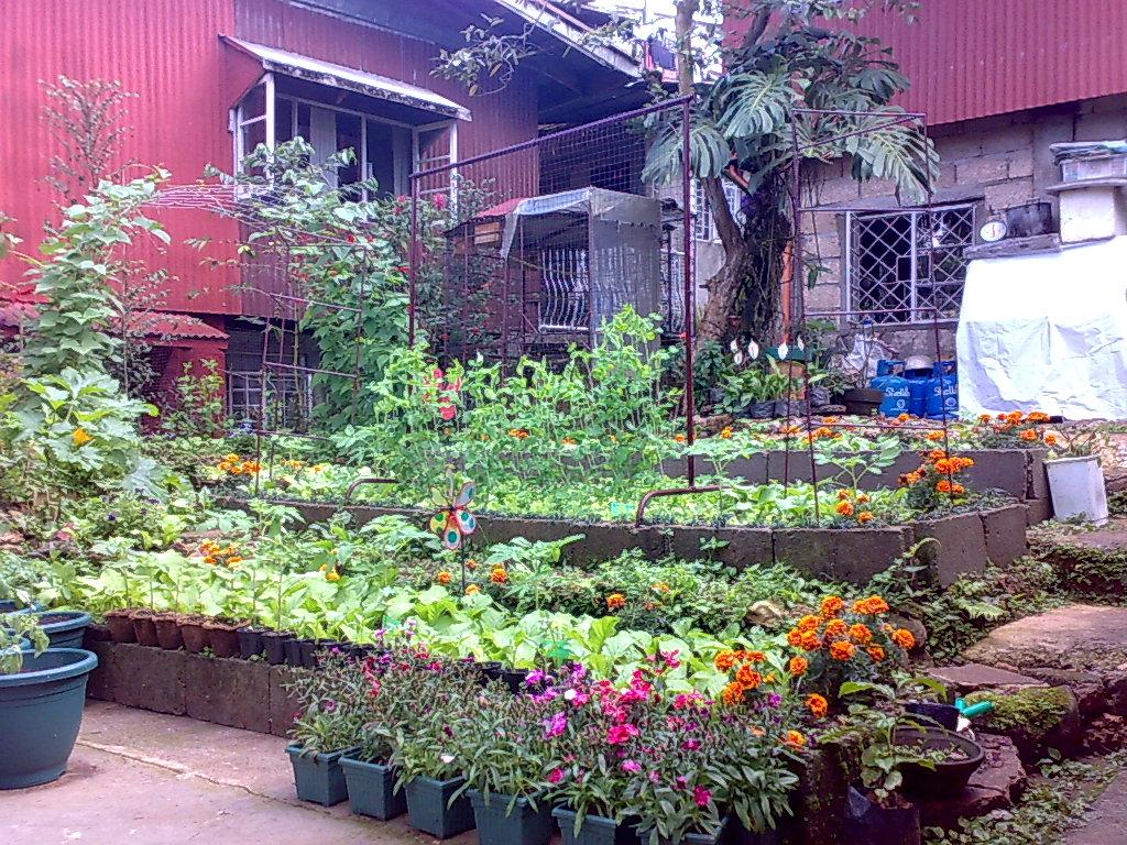 Backyard Gardening: The New Terraced Garden on Terraced Backyard Garden id=86996