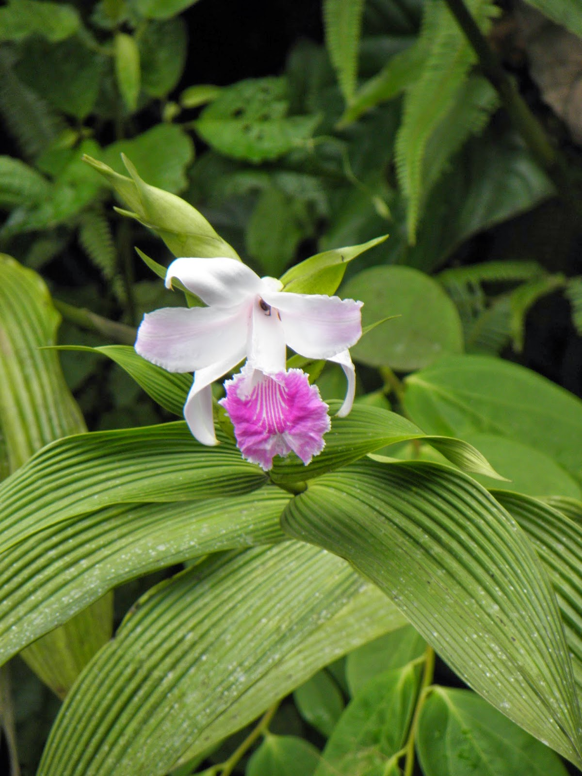 Amazing Rainforest Plant Wednesday Facts