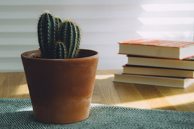 Pile of books and a cactus