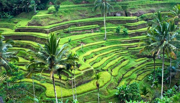 10 Tempat Wisata Di Bali Yang Wajib Dikunjungi News Piko