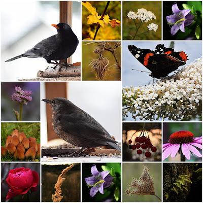 Bilder aus der Natur-Macroaufnahme-Nahaufnahme-