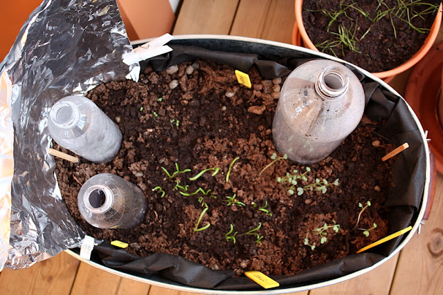 Gjenbruk gamle plastflasker og bruk som mini-drivhus