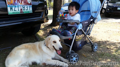 mhershey - golden retriever guarding baby