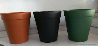 "6"" nursery pots"