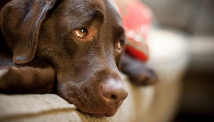 Ανατριχιαστικές εικόνες! Θρίλερ με έμβρυο που βρέθηκε στο σώμα σκυλίτσας στην Καλαμπάκα!(photo)