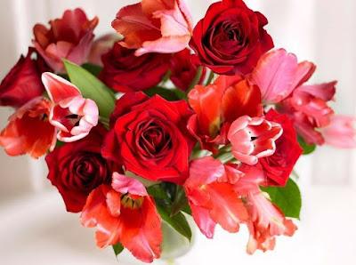 Bông hồng đỏ đẹp nhất thế giới