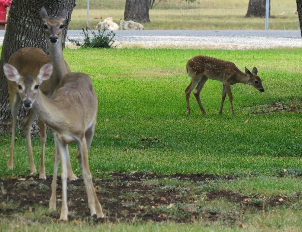 Timeless Treasures The Bird Feeding Lamp Dear Oh Deer