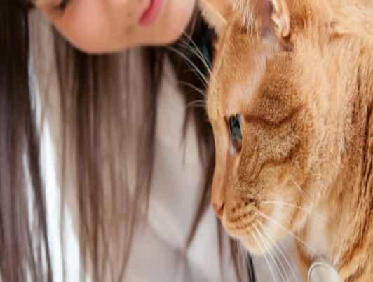 فقدان,شعر,فرو,قطط,قطة,اسباب,علاج