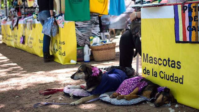 La Ciudad de Buenos Aires realiza una nueva jornada de mascotas