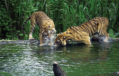 Animals in Sundarban Jungle