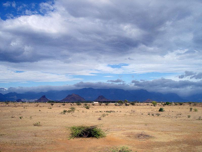 Desert Biome Characteristics