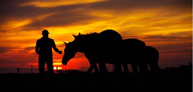 cavalos-clube-do-cavalo-capa-facebook-sunset-horse-vetarq