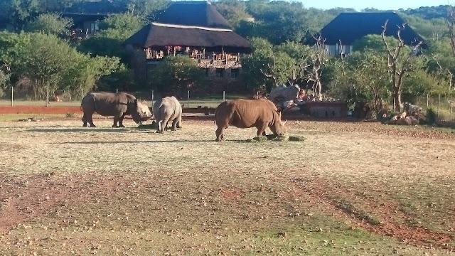 Nashörner am Wasserloch in Okutala