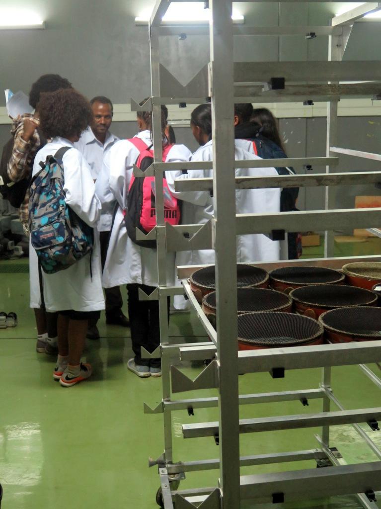 education l environnement et entomologie en ethiopie comment nourrir les mouches ts ts en. Black Bedroom Furniture Sets. Home Design Ideas