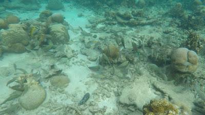 snorkeling Pulau Tioman, Malaysia