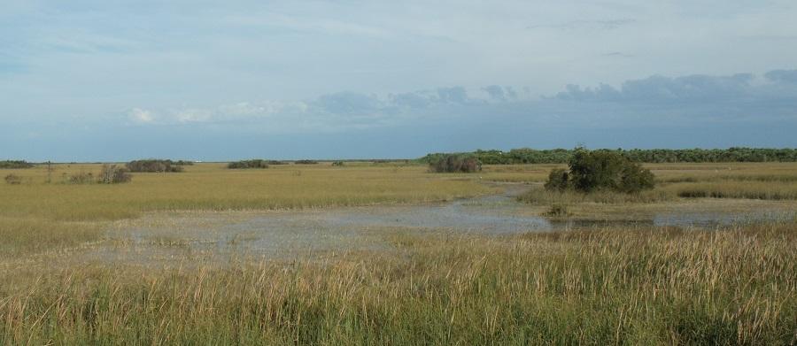 Paisajes de los Everglades