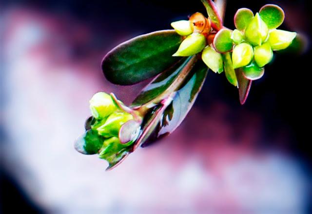 Hasil Hunting Foto Macro Bunga Hari Ini