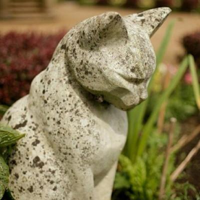 los-gatos-del-castillo-de-belfast