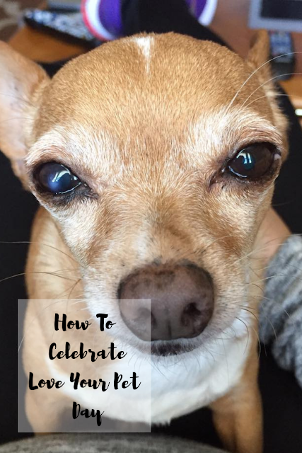 How To Celebrate Love Your Pet Day