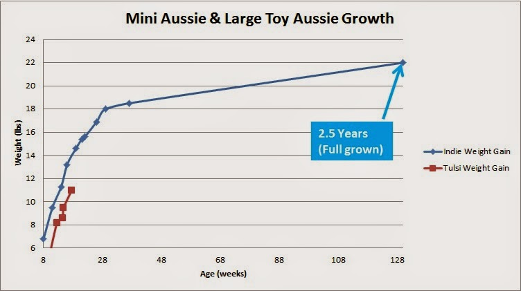 Raising A Mini Aussie Growth Stats