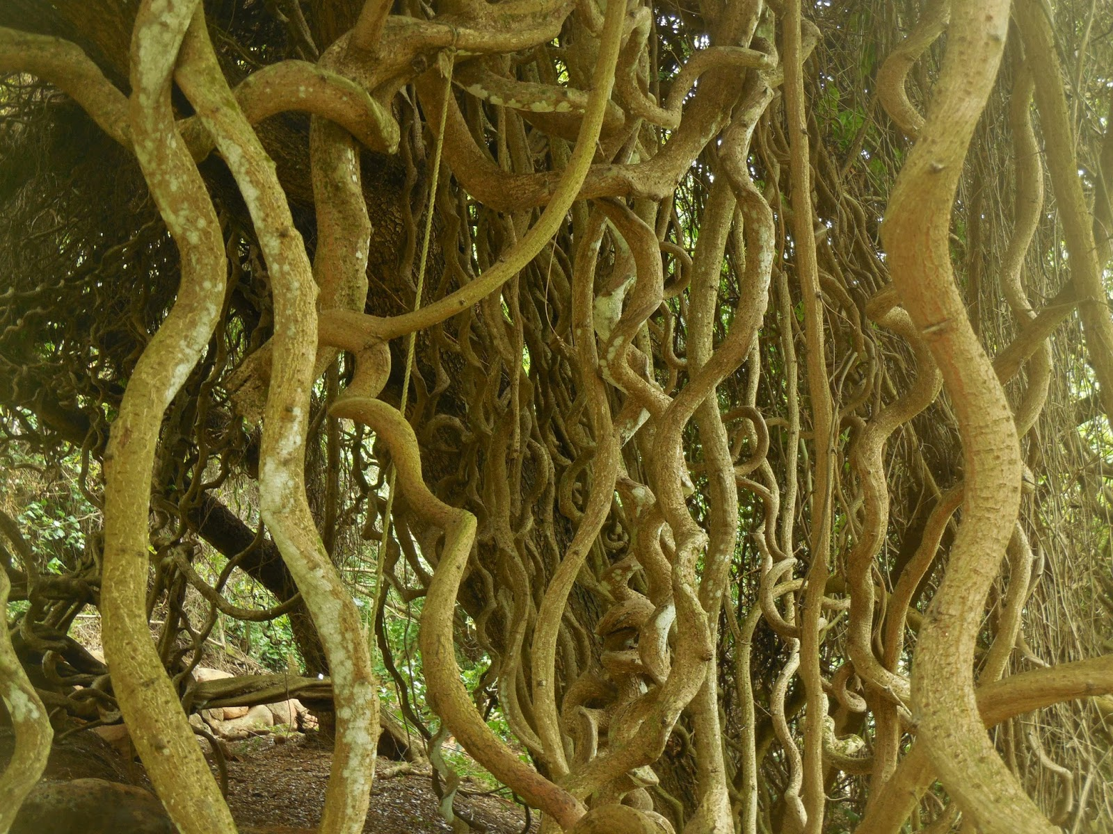 Wanderings of the old sloat: McBryde Garden on Kauai
