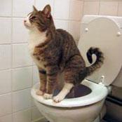 Source : https://i1.wp.com/2.bp.blogspot.com/-rX_ZtMcruzI/TpLQ-rIasGI/AAAAAAAAAZI/MzQIiW10baM/s1600/cat-using-toilet.jpg