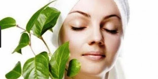 Seperti kita tahu manfaat daun handeuleum bagi kesehatan dan cara pengolahnya sangatlah ba Manfaat Daun Handeuleum Bagi Kesehatan  dan Cara Pengolahannya